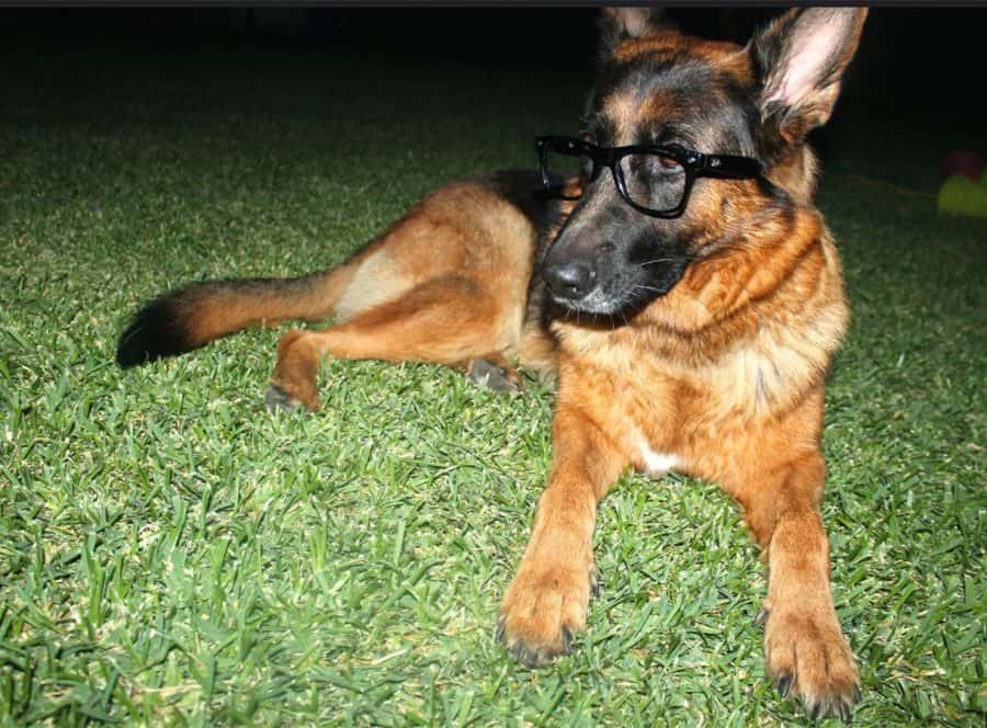 Hipster Dog Names