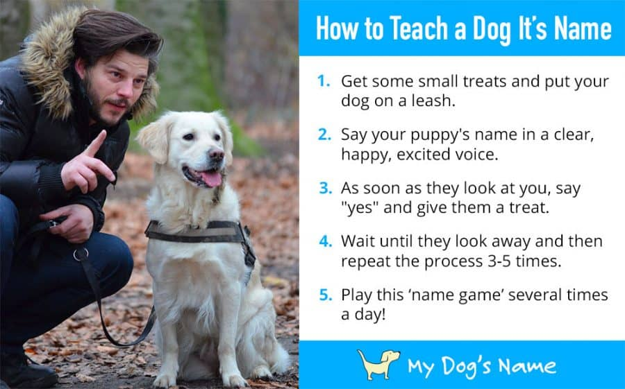 how to teach a dog its name - infographic
