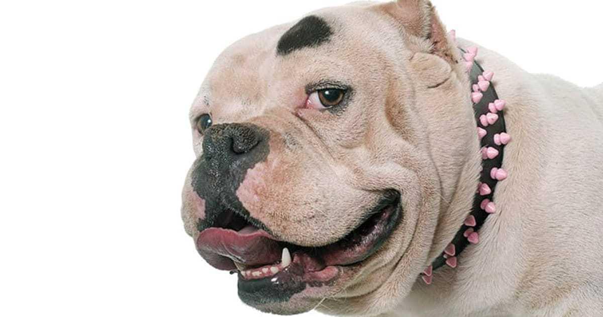 Badass Dog Names