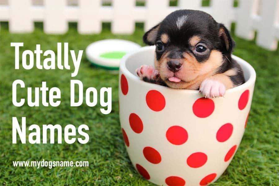 cute dog names - dog in teacup