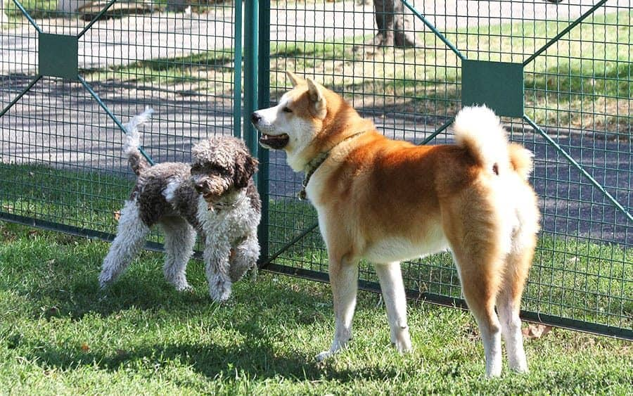 dogs in dog park