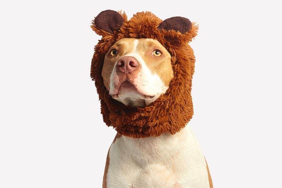 funny dog in bear costume