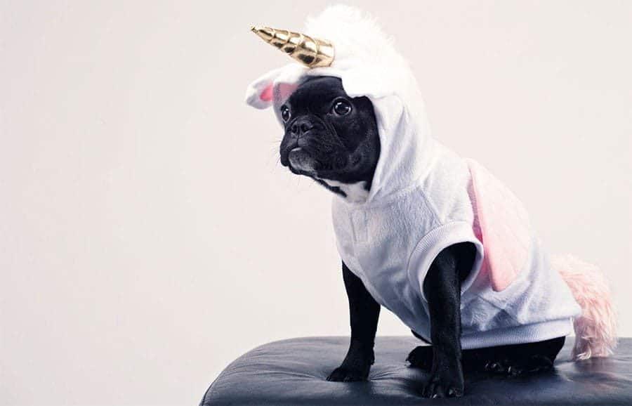 funny dog names - dog unicorn