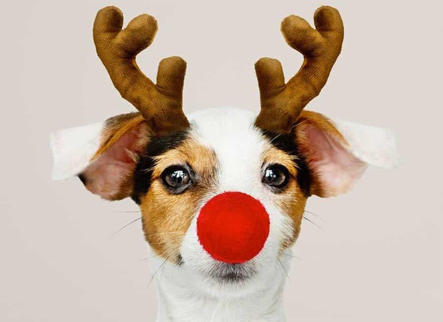 funny dog reindeer nose