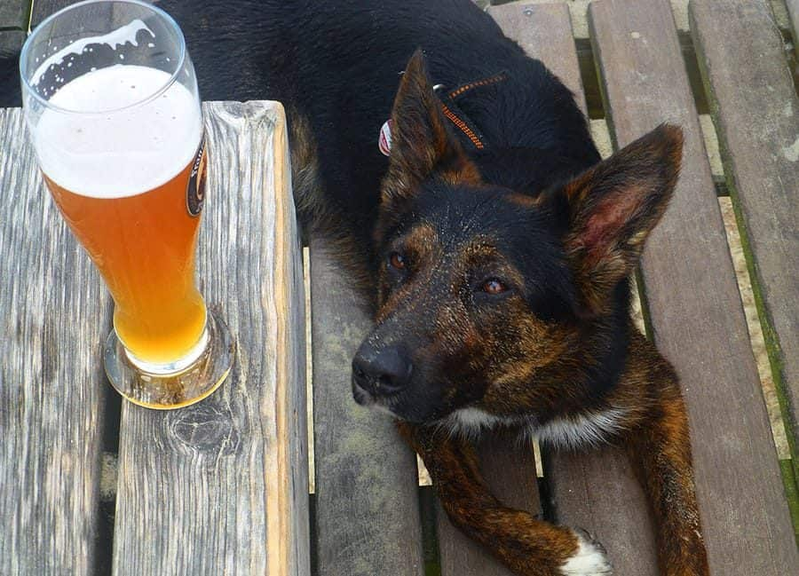 Beer Dog Names