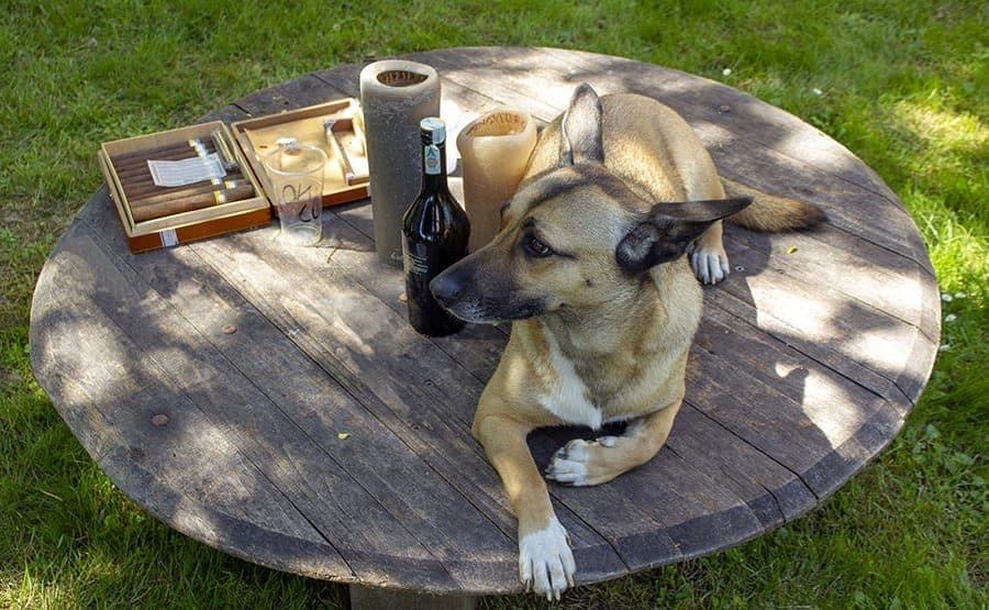 Dog with booze