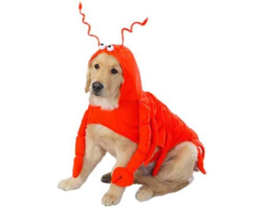 Dog Lobster Costume
