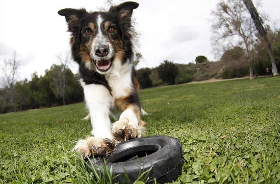 country dog names - dog with tire