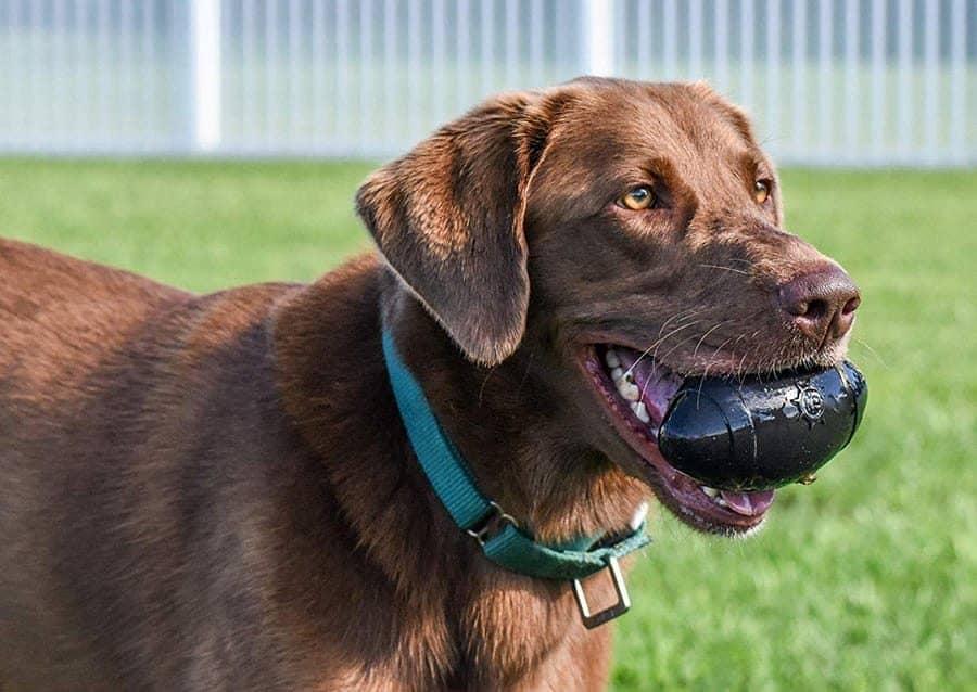 Dog Football - Indestructible Dog Toys For Pit Bulls