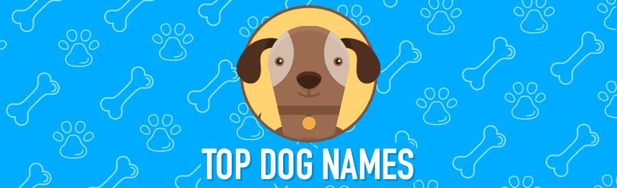 top dog names banner