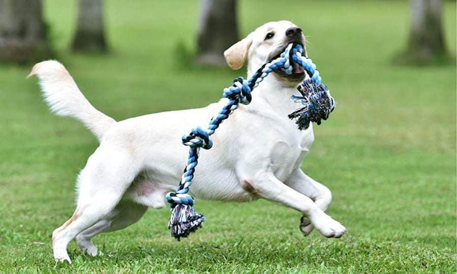 Dog rope toy