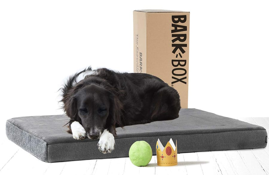 BarkBox bed