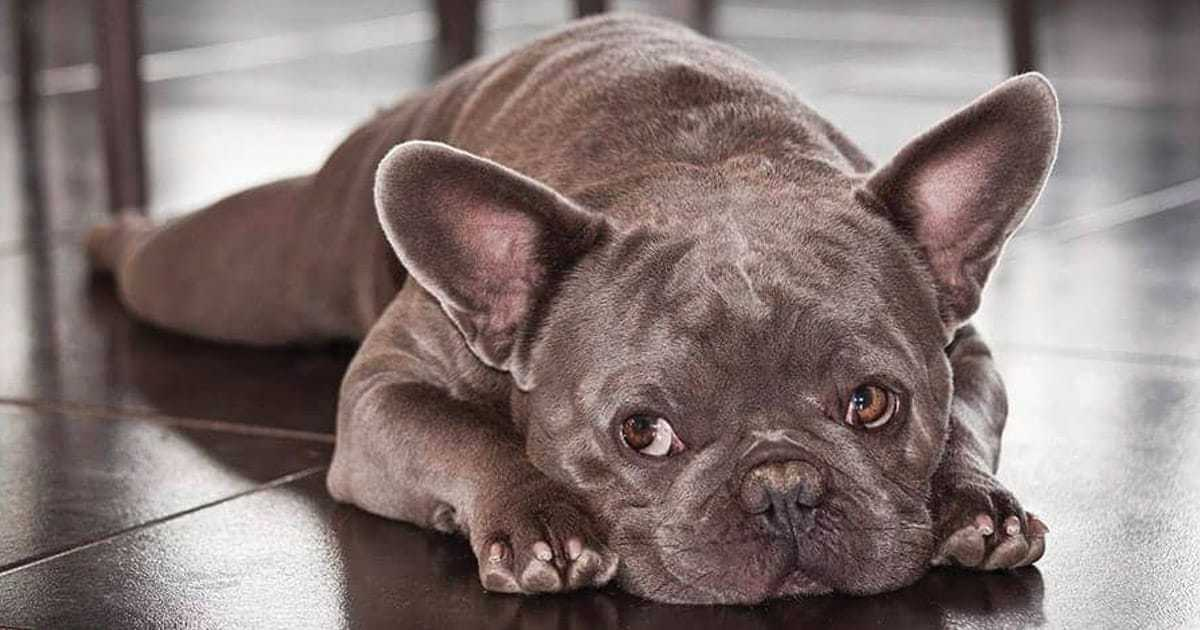 grey dog names