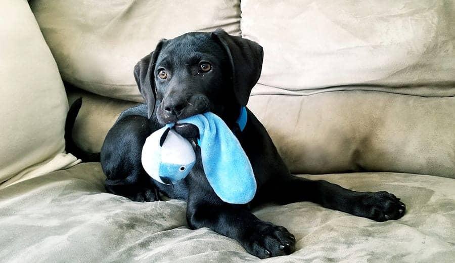 Exercise dog indoors