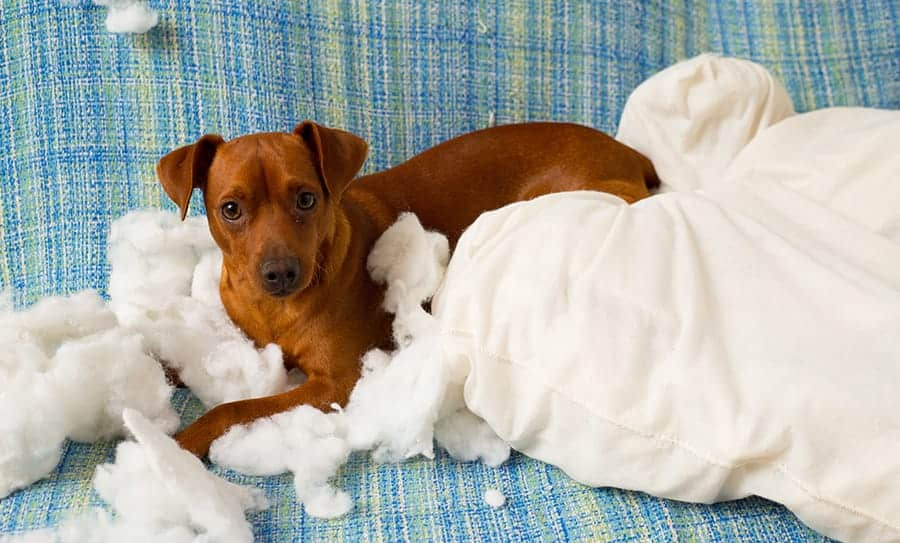 How to puppy proof your house in 10 simple steps