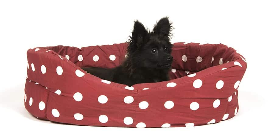 Cute dog beds conclusion