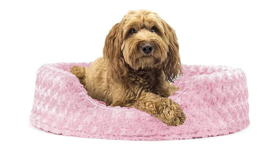 Cute dog beds for girl dogs