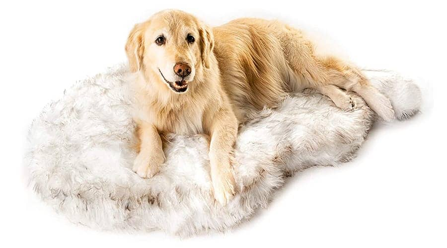 Awesome dog beds