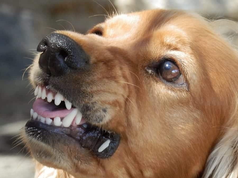 dog mouthing affection
