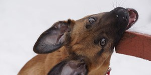 Dog mouthing