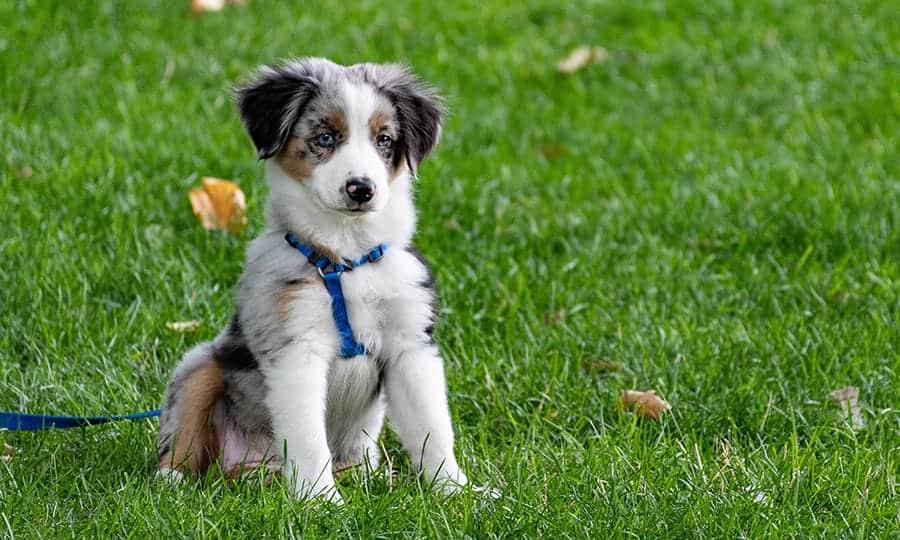 Pick a dog breed