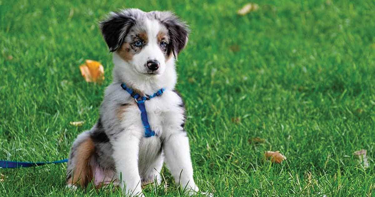 puppy breed sitting in grass