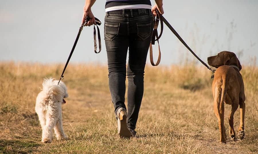 How to train a dog to walk on a leash