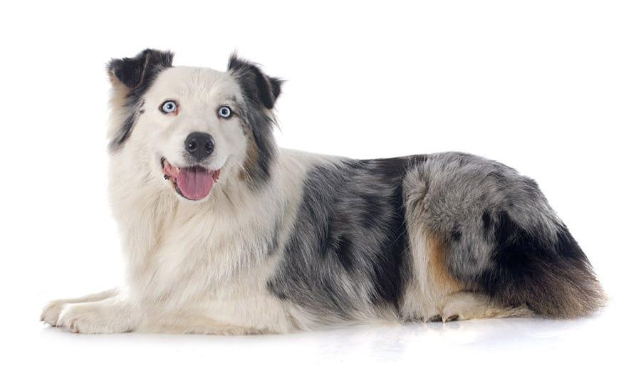 blue-eyed dog names
