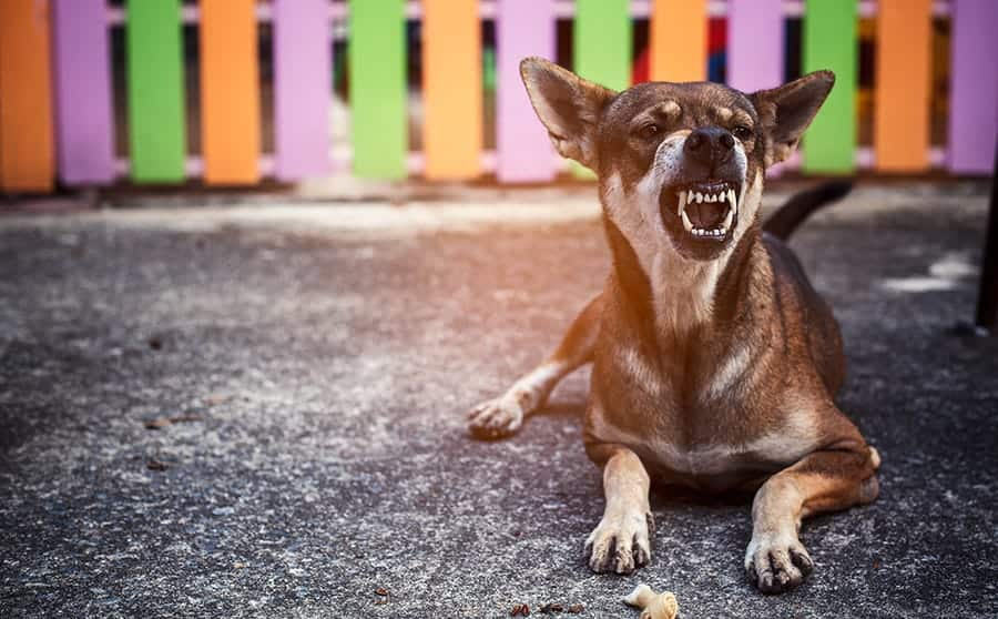 How to Train a Dog Not to Bite