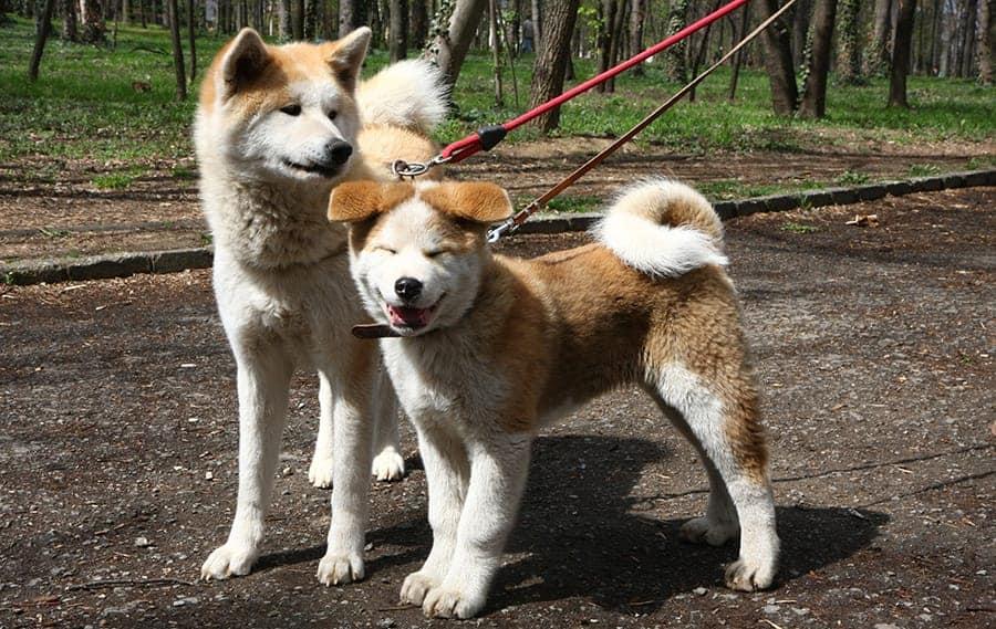 Dogs bonding