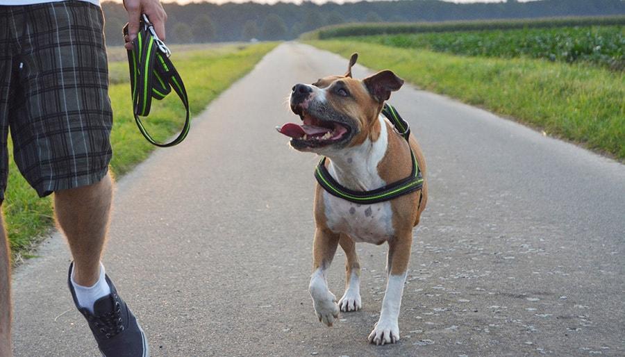 How to Teach a Dog to Heel – Get Started Now - todocat.com