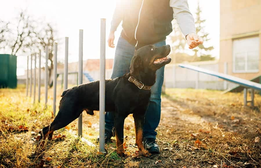 Is It Ever Too Late to Start Training a Dog - find out