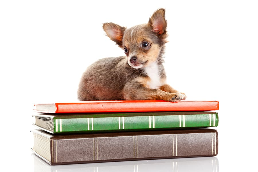 Dog with books