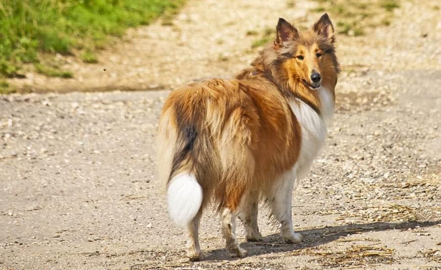 dog looking backward