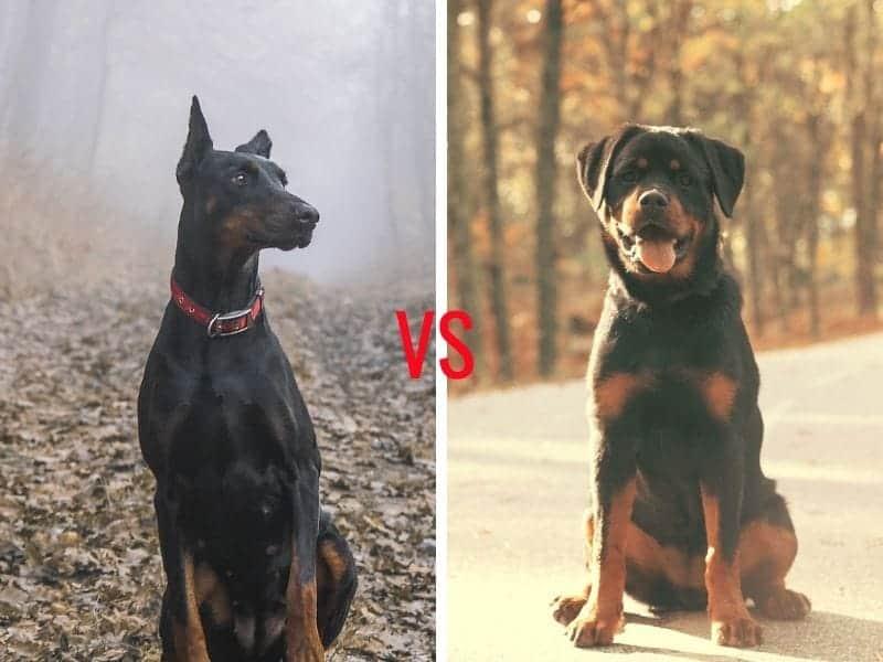 Dogs comparison
