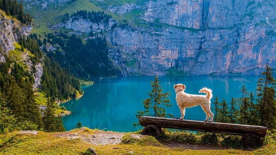 Norse Dog Names - dog near mountains and lake