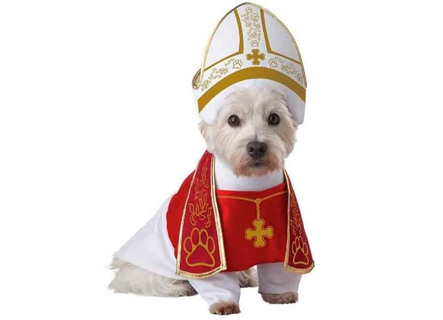 pope puppy