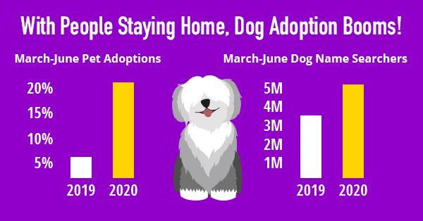 dog adoption chart
