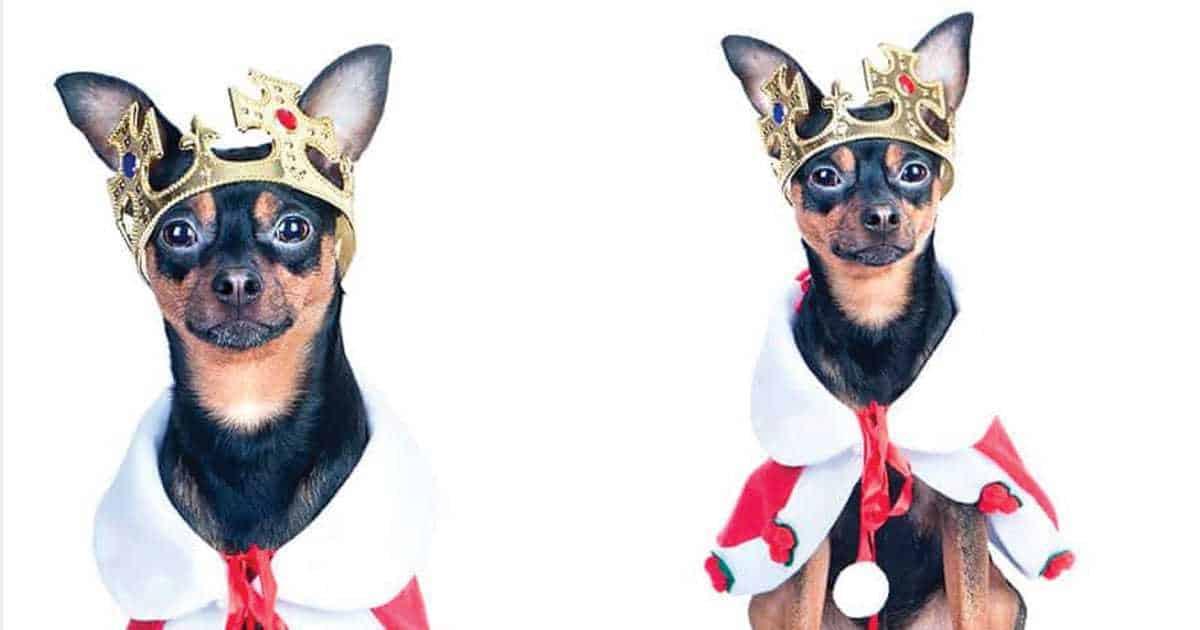 regal dog names