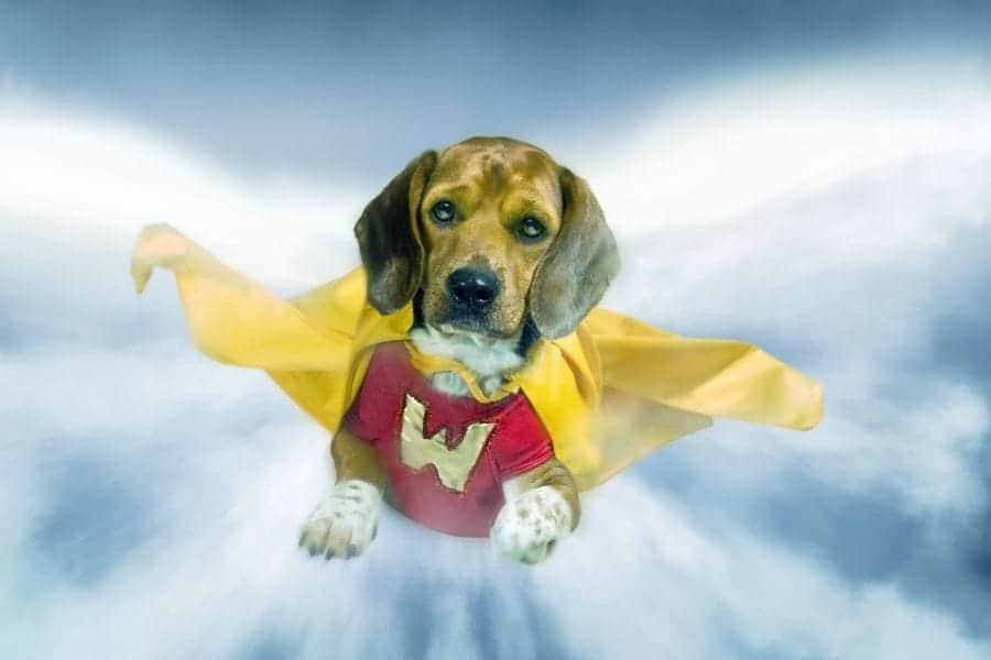 Superhero dog names