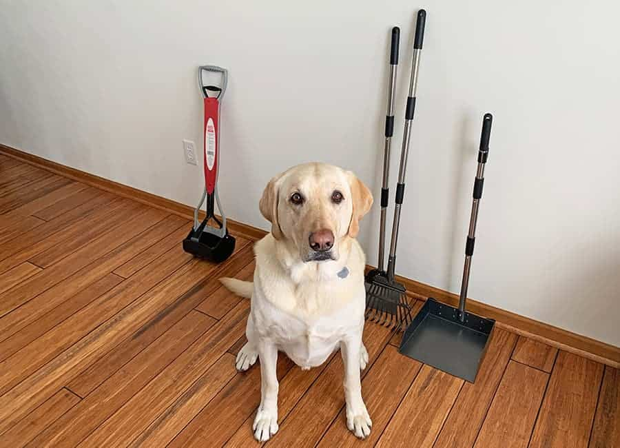 best pooper scoopers - lab with dog scoops