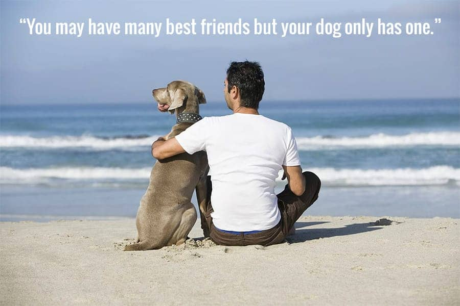27 Dog Best Friend Quotes That Perfectly Sum up Your Relationship