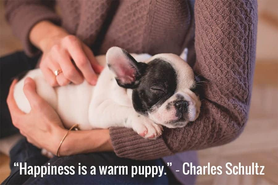 Puppy in Arms - Dog Best Friend Quotes - happiness is a warm puppy