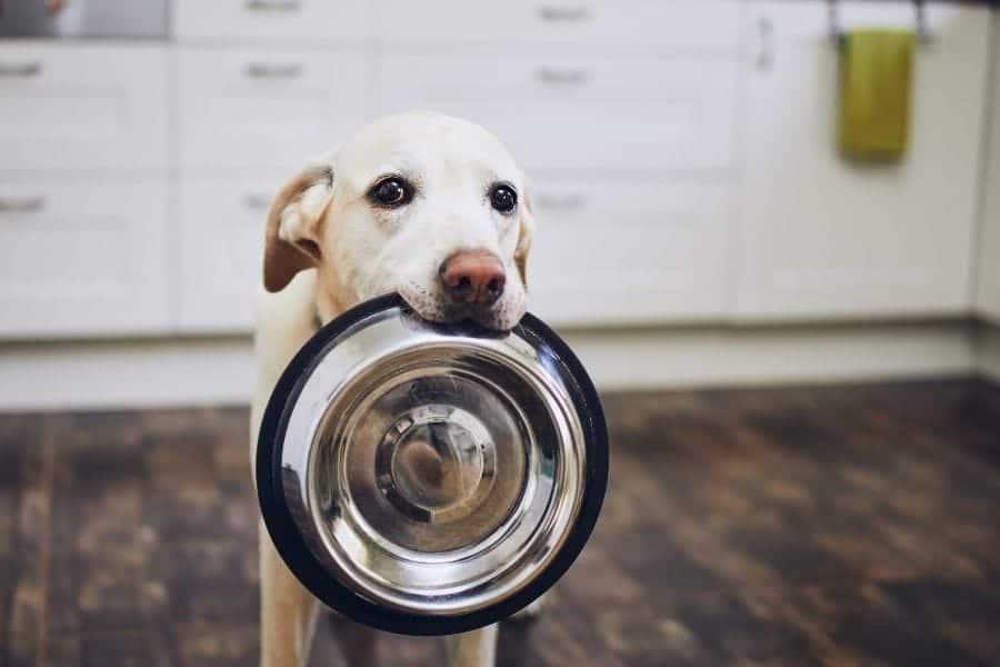 La mejor comida para perros para las alergias