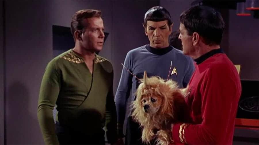star trek dog names - doc kirk spock dog