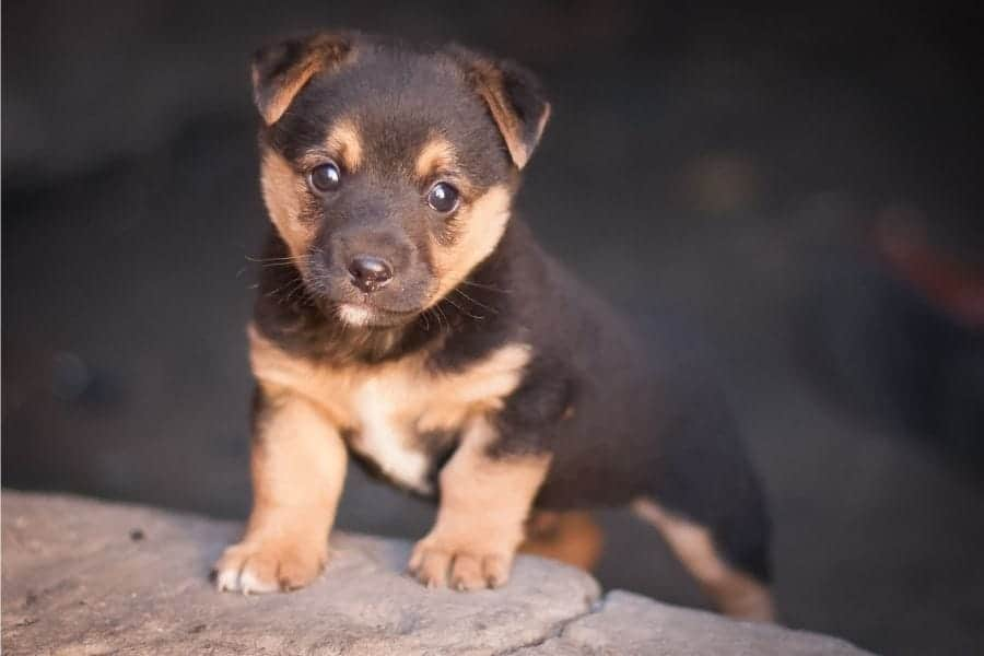 Brown puppy names
