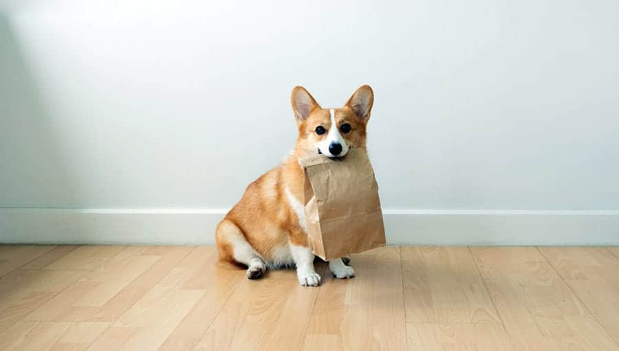 dog tricks - dog carrying bag
