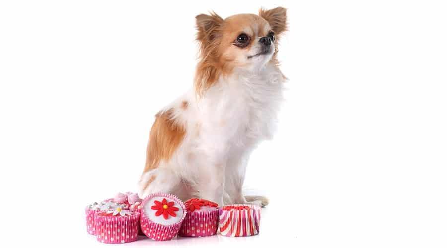 dog cupcake recipes
