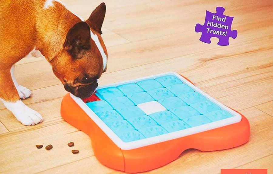 dog tricks - dog puzzles