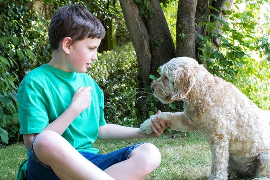 dog tricks - dog shaking hands